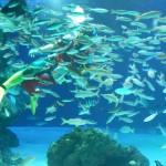 魚と泳ぐダイバー